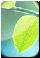 Обыкновенная ромашка